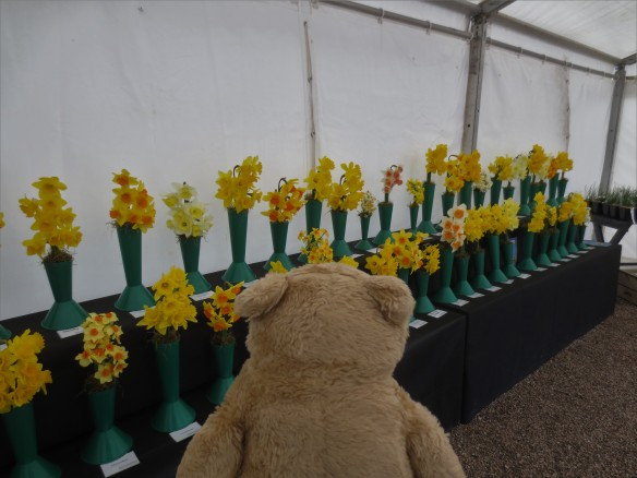 Cotehele Daffodil Day Horace The Alresford Bear