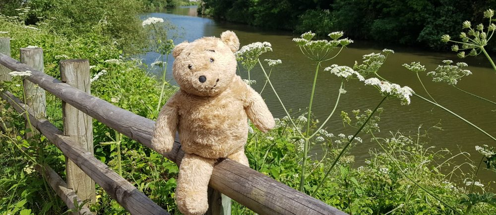 Horace the Alresford Bear